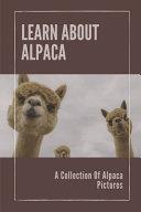 Learn About Alpaca