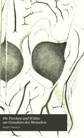 Die Furchen und Wülste am Grosshirn des Menschen: Zugleich als Erläuterung zu dem Hirnmodell