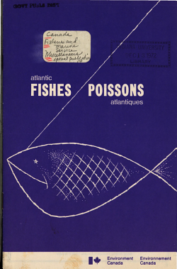Atlantic Fishes PDF