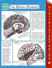 The Brain (Human) (Speedy Study Guides)