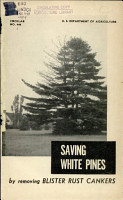 Saving White Pines by Removing Blister Rust Cankers PDF