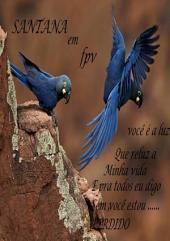 Santana Em , Frases , Prosas Versos