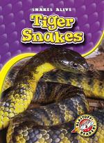 Tiger Snakes
