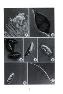 Nova Hedwigia Book PDF