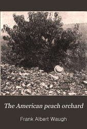 The American Peach Orchard: A Sketch of the Practice of Peach Growing in North America at the Beginning of the Twentieth Century