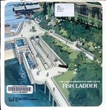 The Lake Washington Ship Canal Fish Ladder
