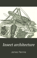 Insect Architecture