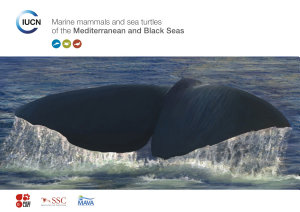 Marine mammals and sea turtles of the Mediterranean and Black Seas
