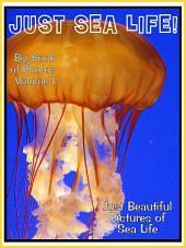 Just Sea Life! vol. 1: Big Book of Ocean Marine Creatures Photographs & Pictures