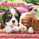 Cavalier King Charles Spaniel Puppies   Cavalier King Charles Spaniel Welpen 2021   18 Monatskalender Mit Freier DogDays App PDF
