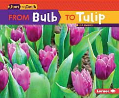 From Bulb to Tulip PDF