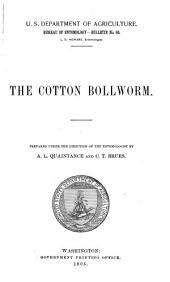 The Cotton Bollworm
