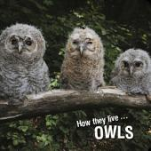How they live... Owls: Learn All There Is to Know About These Animals!
