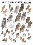 Sibley s Owls of North America