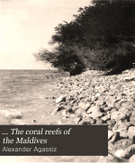 ... The Coral Reefs of the Maldives