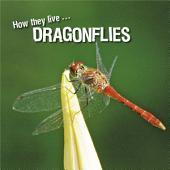 How they live... Dragonflies: Learn All There Is to Know About These Animals!