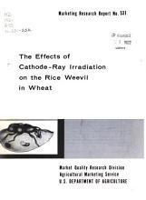Marketing Research Report PDF