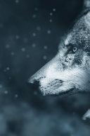 Wolf Totem PDF