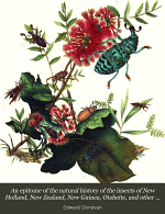 An Epitome of the Natural History of the Insects of New Holland, New Zealand, New Guinea, Otaheite, and Other Islands in the Indian, Southern and Pacific Oceans