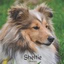 Sheltie Calendar 2021