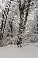 Snow Covered Branches Scenic Winter Photo Journal