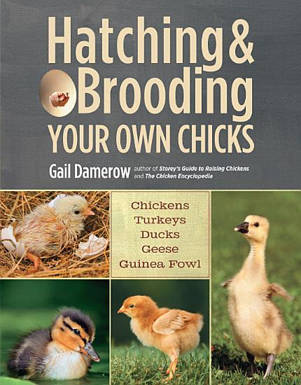 Hatching   Brooding Your Own Chicks PDF