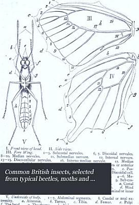 Common British Insects Selected from the Typical Beetles  Moths  and Butterflies of Great Britain PDF