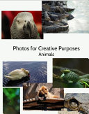 Photos For Creative Purposes: Animals