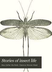 Stories of Insect Life: Second Series, Summer and Autumn
