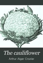 The Cauliflower