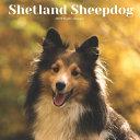 Shetland Sheepdog 2021 Wall Calendar