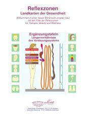 3 - Längenverhältnisse des Verdauungssystems: Reflexzonen - Ergänzungstafeln für die Naturheilkunde und Physiotherapie