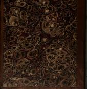 Specimen el-lobabi sive genealogiarum Arabum, quas ... abbreviavit et emendavit 'Izz-addin 'Abu-l-Hasan 'Ali ibn Muhammad Ibn al-'Atir al-Jazari ... nunc primum arab. ed. Ferdinandus Wüstenfeld
