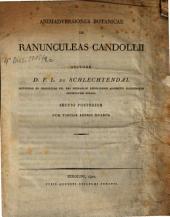 Ranunculeas Candollii