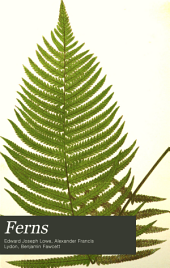 Ferns: Aspidium, Hypoderris, Mesochlaena, Oleandra, Nephrolepis, Woodsia, Cystopteris, Hemionitis, Olfersia, Hymenodium, Acrostichum, Polybotrya, Platycerium, Ophioglossum, Botrychium