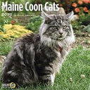 2020 Maine Coon Cats PDF