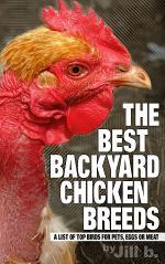 The Best Backyard Chicken Breeds