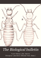 The Biological Bulletin: Volume 4