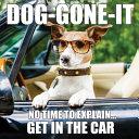 Dog Gone it