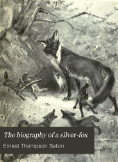 The Biography of a Silver-fox: Or Domino Reynard of Goldur Town, with Over 100 Drawings by Ernest Thompson Seton
