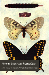 How to Know the Butterflies: A Manual of the Butterflies of the Eastern United States