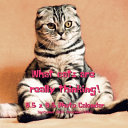 What Cats Are Really Thinking! 8.5 X 8.5 Calendar September 2021 -December 2022