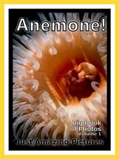 Sea Anemone Photos!: Big Book of Photographs & Pictures of Under Water Ocean Sea Anemones, Vol. 1