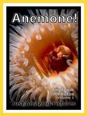 Sea Anemone Photos!: Big Book of Photographs & Pictures of Under Water Ocean Sea Anemones, Vol. 1