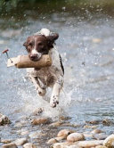 Training the Best Dog Ever PDF