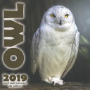 The Owl 2019 Mini Wall Calendar  UK Edition