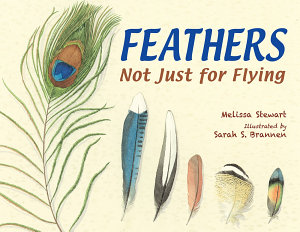 Feathers  Not Just for Flying