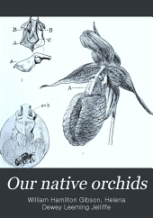 Our native orchids: a series of drawings from nature of all the species found in the northeastern United States