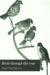 Birds Through the Year