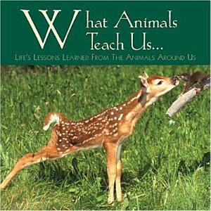 What Animals Teach Us